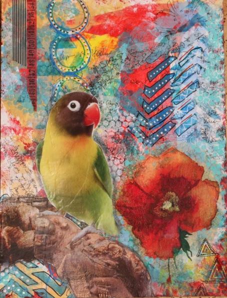AJB class parrot