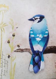 Blue Jay 5